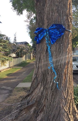Blue ribbon adorns a tree on 90th Street, Edmonton