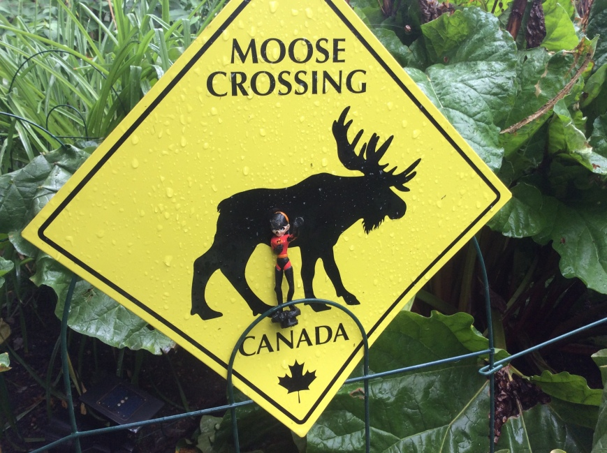 moose stay